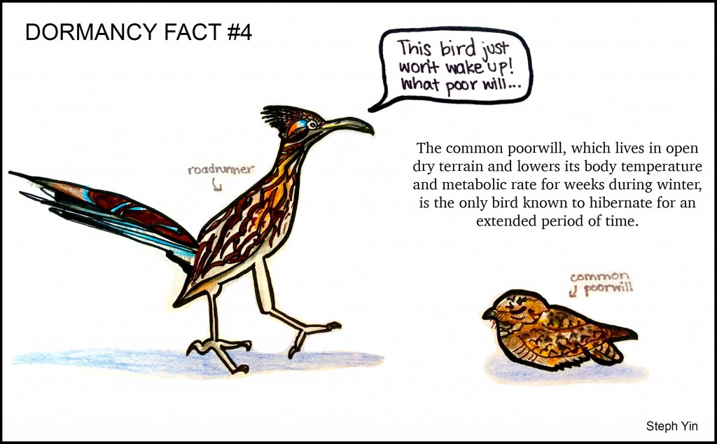 poorwill-cartoon
